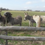 Friendly visitors behind the garden fence!